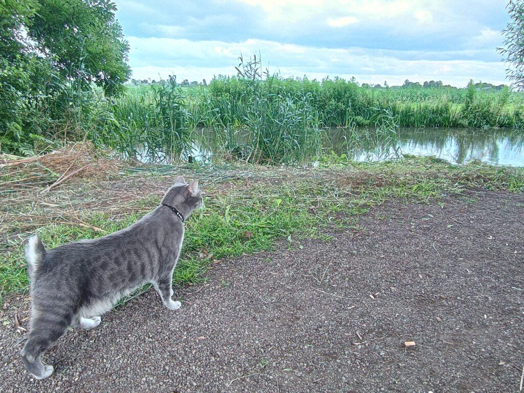 גריי חוקרת את הסביבה